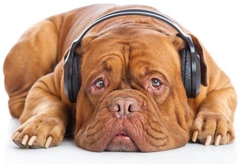 Hond-vuurwerk1 bron wwwvoedingvoorhondennl