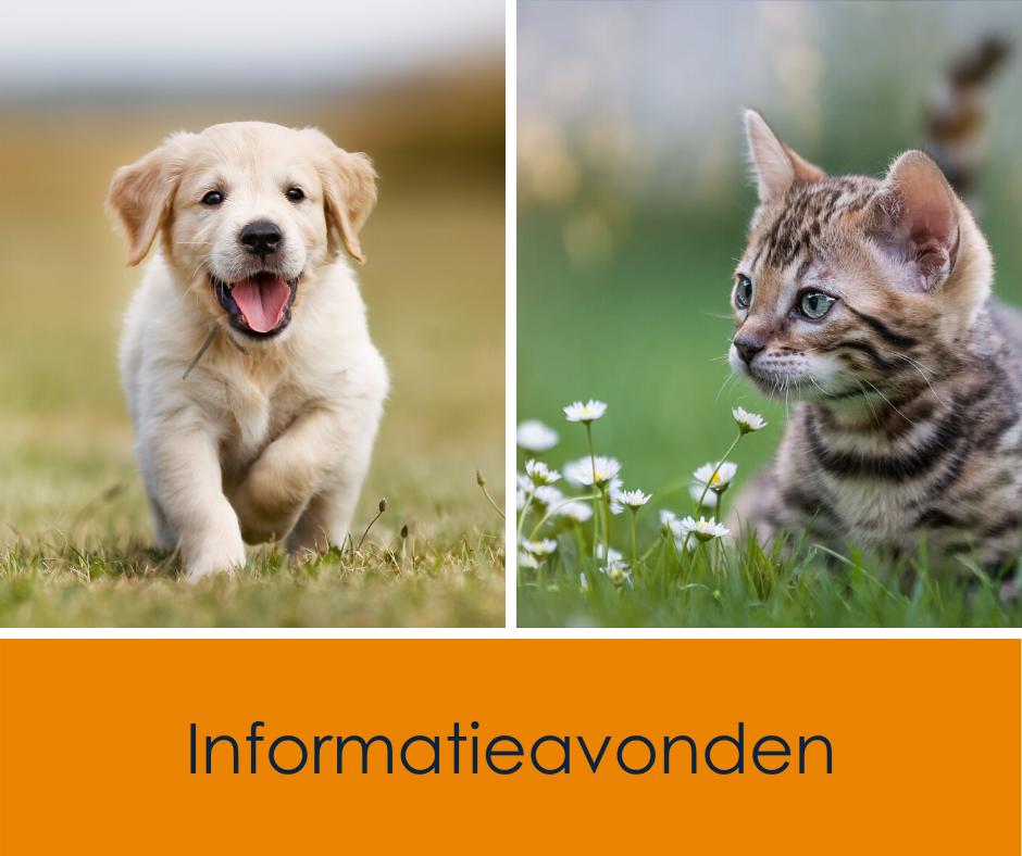Informatieavonden pup en kitten