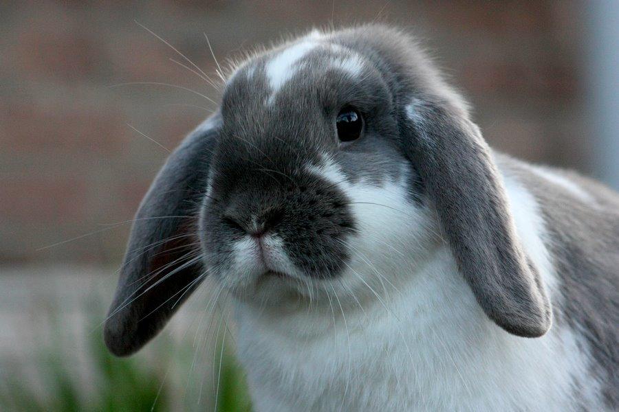 konijn 2