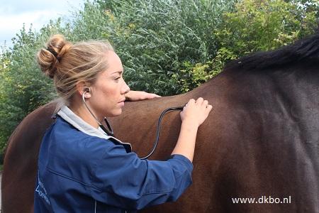 preventieve zorg paard paardenzorgplan